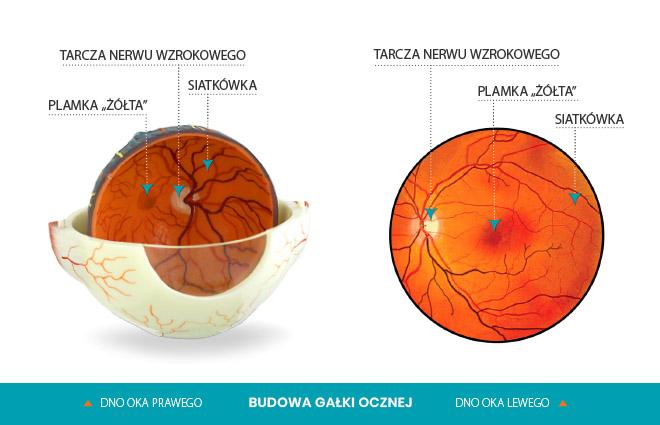 dno oka lewego i prawego